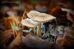 fungi (photos4dreams) Tags: spaziergang walk feld wald wiese forest trees bäume photos4dreams p4d photos4dreamz