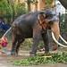 Elephant Beauty Treatment (1X7A4548b)