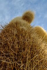 Under the cacti (Steve McCaul) Tags: beginnerdigitalphotographychallengewinner