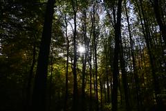 Herbst (joe.dylewski) Tags: wald wood germany deutschland baum tree natur nature holz park himmel sky sonne sun blätter foliage landschaft landscape oberhausen ruhrgebiet