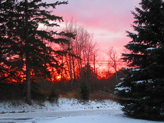 IMG_2142 11-13-2018 (PGK88) Tags: sunset trees landscape snow winter cold snowy outdoors glow red evening nature 2018 365 pgk88