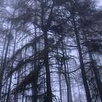 Misty Trees thumbnail