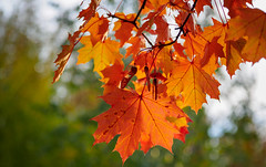 Colors of autumn (banagher_links) Tags: olympus omd em10 mark iii sigma mft micro 43 moscow russia autumn nature