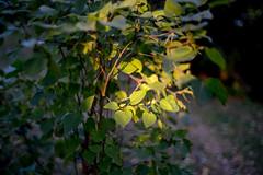 late light (veit.schiffmann) Tags: a7m3 sony ilce7m3 a7iii ilce fe zeiss planar 50mm