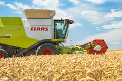 Wheat Harvest | CLAAS (martin_king.photo) Tags: harvest harvest2018 ernte 2018harvestseason combineharvester combine harvester new modernmachine summerwork powerfull martin king photo machines strong agricultural great czechrepublic agriculturalmachinery farm working modernagriculture landwirtschaft martinkingphoto moisson machine machinery field huge big sky agriculture power dynastyphotography lukaskralphotocz day fans work place yellow gold golden eos country lens rural camera outdoors outdoor goldenhour colours fields lines claaslexion southmoravia claas clouds cloudyday bluesky
