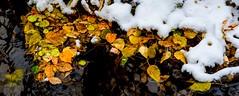 Autumn leaves (googling2000g) Tags: fall stalbert alberta loishole provincial park