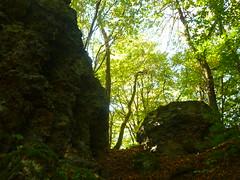 P1210203 (Jörg Paul Kaspari) Tags: wanderung wandertour herbst autumn fall 2018 diebergkraterseetour lava lavaklippe lavaklippen buchenwald mosenberg