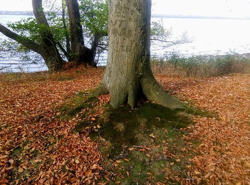 Fredensborg Slot - root