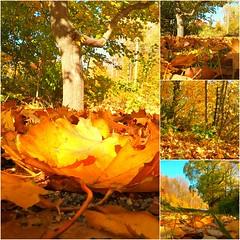 Colorful Autumn,Norway (iJoydeep) Tags: autumn colorfulautumn fall goprohero5black goprohero5 nikon norway sandefjord