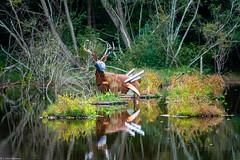 Weird Deer (brighteyespics) Tags: athensga bluesky georgia nature oconeeforestpark sunflare sunset uga d5300 lake lightroom moon nikon photographer sculpture water athens unitedstates us