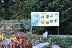 DSC_2493 (Puntin1969) Tags: nikon reflex svizzera ticino montagna ottobre autunno fiori aiuola