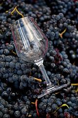 spot (♥iana♥) Tags: vino uva grape vendemmia autunno autumn fall rosso red vite vigna grapevine montemarano avellino campania italia