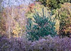 Cold Fall Evening (Umer Javed) Tags: cootesparadise hamilton hamont rbg royalbotanicalgardens nature natural wilderness trail hiking adventure canon cans2s hfg rebelt3i eos600d autumn fineart