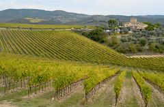 Fizzano (antonella galardi) Tags: toscana siena poggibonsi 2018 autunno vigna vigneto filari castellina fizzano