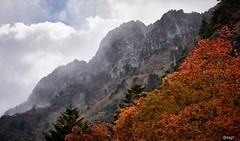 Mt.ISHIZUCHI 愛媛  西条市 石鎚山10 14 2018 (tsake123) Tags: sony sky sel2470z alpha a7 alpha7 mountain mirrorless mountainside tree landscape c1 captureone cloud autumn