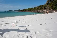 Whitsunday Island - Whitehaven Beach (Rafael Zenon Wagner) Tags: strand weis strahlend ozean türkis blau möwe nikon d810 28mm korallenmeer coralsea beach whitely bright ocean turquoise blue seagull