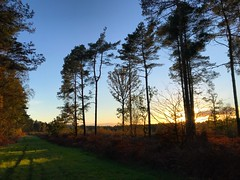 Woolmer Sundown (Marc Sayce) Tags: tree shadows sundown woolmer ranges forest griggs green conford south downs national park hampshire autumn october 2018