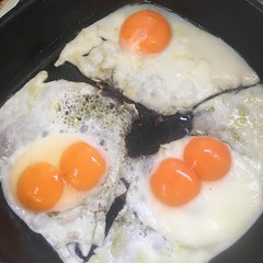 """Brisvegas. Double yolkers - four out of five! (miaow) Tags: bellalunaboat exploring liveaboard offgrid adventure sailing cruising """"seagypsies"""" spring2018 light australia brisbane city frasercoastorganiceggs eggs"""