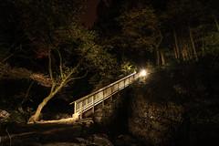 The Miners Bridge (Rob Pitt) Tags: the miners bridge betwsycoed night photography lightpainting wales cymru trees sony a7rii canon 1740 f4 l autumn