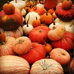 Pumpkin Season .... (steamboatwillie33) Tags: pumpkins 2018 indiana fall colorful allshapesandsizes farmersmarket lovemesomefall orange farmerswagon beautifulfallday gourds halloween fallseason beautifultimeofyear