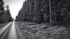 You Are Too Far Away (endresárvári) Tags: sweden nature trip tour winter bw monochrome red selectedcolor pine pines pineforest pinetree pinetrees