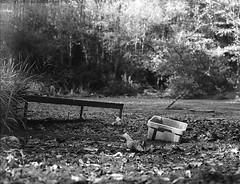 Teich (Christian Güttner) Tags: monochrome mediumformat mittelformat niemcy natur nature natura nrw bokeh blackandwhite bokhe bw baum tyskland tree träd czarnobiale 6x45 analog analogue svartvitt schwarzweis schwarzweisfotografie sw sommer summer deutschland film germany krajobraz landschaft landscape landscapes lato outdoor wald europa ecodeveloper etrsi euregio 120 rollfilm zenzabronica umwelt ilford ilforddelta400pro