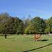 The Horse Pasture