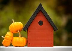 Cozy Birdhouse (Karen_Chappell) Tags: birdhouse red orange pumpkin fall bokeh green wood wooden paint painted autumn october stilllife stack balance three 3 pumpkins decoration decor newfoundland nfld