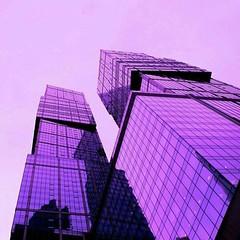 #LilacPurpleViolets ~ ~ #Lilac #Purple #Violet (lilacpurpleviolets) Tags: tumblr flickr purple violet violets lavender lilac purpleviolet purpleviolets