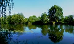 Tour de France – Sur les berges du Thouet (Le.Patou) Tags: france anjou poitou reflect reflet paysage landscape rivière river verdure green blue peaceful serene fz1000