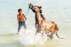 Doma en la isla de Sumba (Andrés Guerrero) Tags: 2018 beach boy caballo doma entrenamiento horse indonesia isladesumba kid mar marosi marosibeach nusatengaratimur océano pantai pantaimarosi playa playamarosi sea sumba sumbaisland training travel viaje