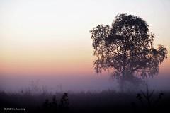 zonop_20181011#02 (wimrozenberg) Tags: ginkelseheide zonsopkomst natuur boom