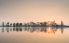 Sunset (@CuongDo) Tags: sundown sunset sun sunlight yellow reflect reflections countryside tree trees sony sonya7mark2 ilcea7m2 vn vietnam kit lenskit