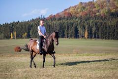 Basim_OS180390 (OliverSeitz) Tags: elbasim wachlarz elda arabian vollblutaraber pferd tier
