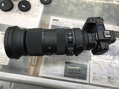 IMG_8011 (digitalbear) Tags: canon eos 6d markii eosr fujiyacamera tokyo japan sigma 60600mm f4563 dg sport