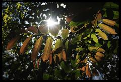 _Z702761 copy (mingthein) Tags: thein onn ming photohorologer mingtheincom availablelight kl kuala lumpur malaysia taman tugu nikon z7 nikkor z 24704 s