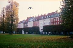 Copenhagen, Kongens Have (gbrammer) Tags: c41 contaxiia sonnar5015 zeissikon copenhagen film portra400 rangefinder 35mm