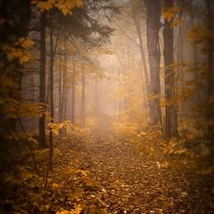 transition (cébé céline) Tags: montréal tranquillité brume montagne sentier brouillard paysage forêt tronc branches arbre bois feuillage tranquility mist mountain path fog landscape forest trunk tree wood foliage cébé céline