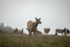 (colmenaj2013) Tags: sfbay sanfranciscobay landscape sanfrancisco tomales hiking fog pointreyes marin travelphotography