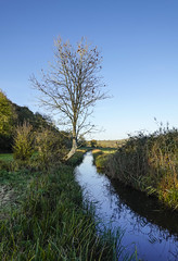 Solitary Tree (Richard Paterson) Tags: tree arun valley south downs national park autumn country canal