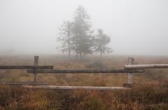 firsCuddle (tobias-eger) Tags: trees autumn nature landscape blackforest outdoor outdoors tourism foggy fog schwarzwald natur landschaft nebel herbst