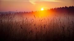 Shiny fog (A.K. 90) Tags: nature natur outside landscape landschaft drausen morning cloudssunsetsstormssunrise sunset autumn redyelloworange fog nebel grass perspektive rot orange gelb sonnenaufgang sonne herbst morgen colorful beautiful schön magic sonyalpha6000 e18135mmf3556oss