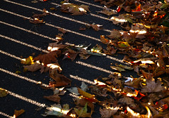 Autumn 'double slit' experiment. (Esmik D'Aguiar) Tags: autumn red gold yellow green leaves light shadow fence pavement nottingham uk sigma dp3 sun