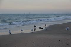 JLF16321 (jlfaurie) Tags: deauville normandie normandy france francia dqaniel mariefrance louisette mechas mpmdf jlfr jlfaurie pentax k5ii plage playa beach seaside mer mar sea