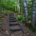 Humpback Trail at George Crosby Manitou State Park, Minnesota