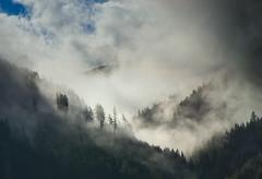 Mountain forest in fog (echumachenco) Tags: tree forest fog cloud hill mountain mountainside hillside sky badgastein salzburg alps outdoor landscape austria österreich pongau nikond3100 mist