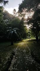 Afternoon Path (Viv Lynch) Tags: portugal travel azores island europe islands açores atlanticocean pontadelgada garden botanicalgarden afternoon jungle azoresislands