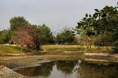 This Is November. (NoBi CooL) Tags: garden park beautiful lake water reflection trees autumn november plants life grass islamabad pakistan rocks natural nature