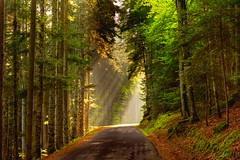 Autumn sun (Valérie C) Tags: auvergne france dust nikon road sunlight fall rays woods autumn sun tree forest nature green foliage country leaves light