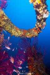 IMG_1393 (davide.clementelli) Tags: diving dive dives padi immersione immersioni ampportofino portofino liguria friends amici underwater underwaterlife sottacqua